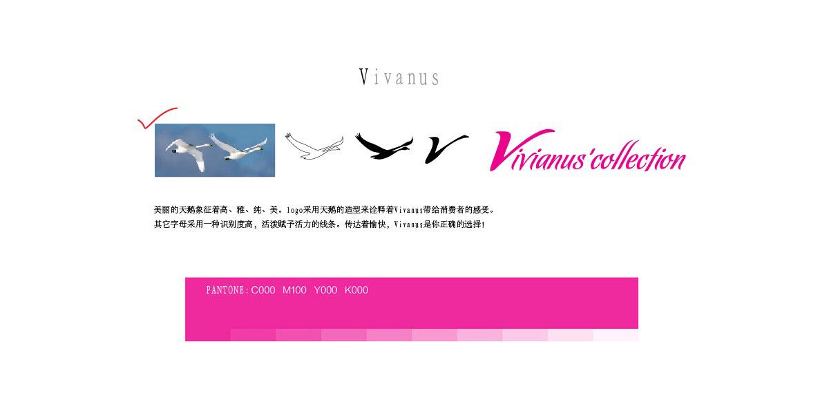 ViVi-2.jpg